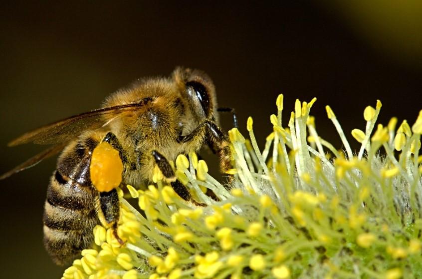 10 feiten over bijen