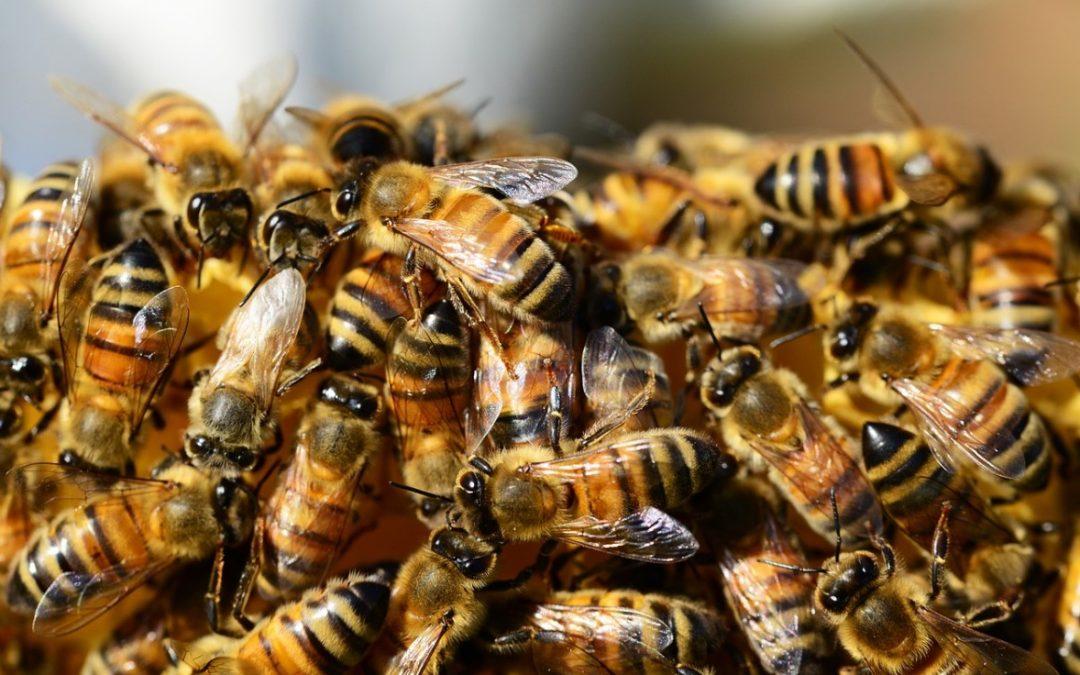 10 feitjes over bijen die je nog niet wist!