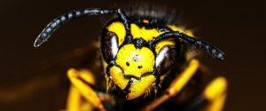 wespennest in de grond